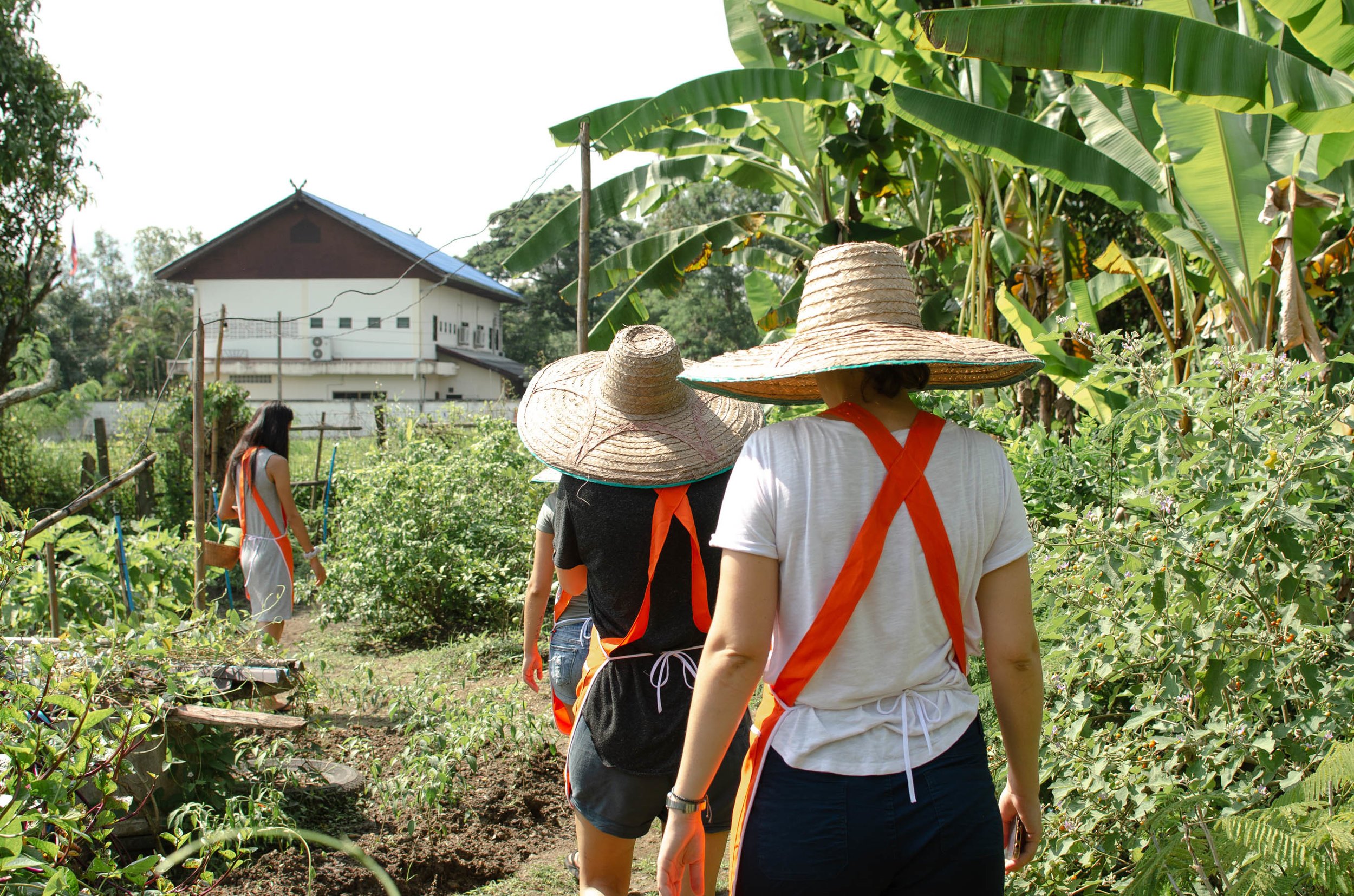 Exploring an organic garden during our Thai cooking class