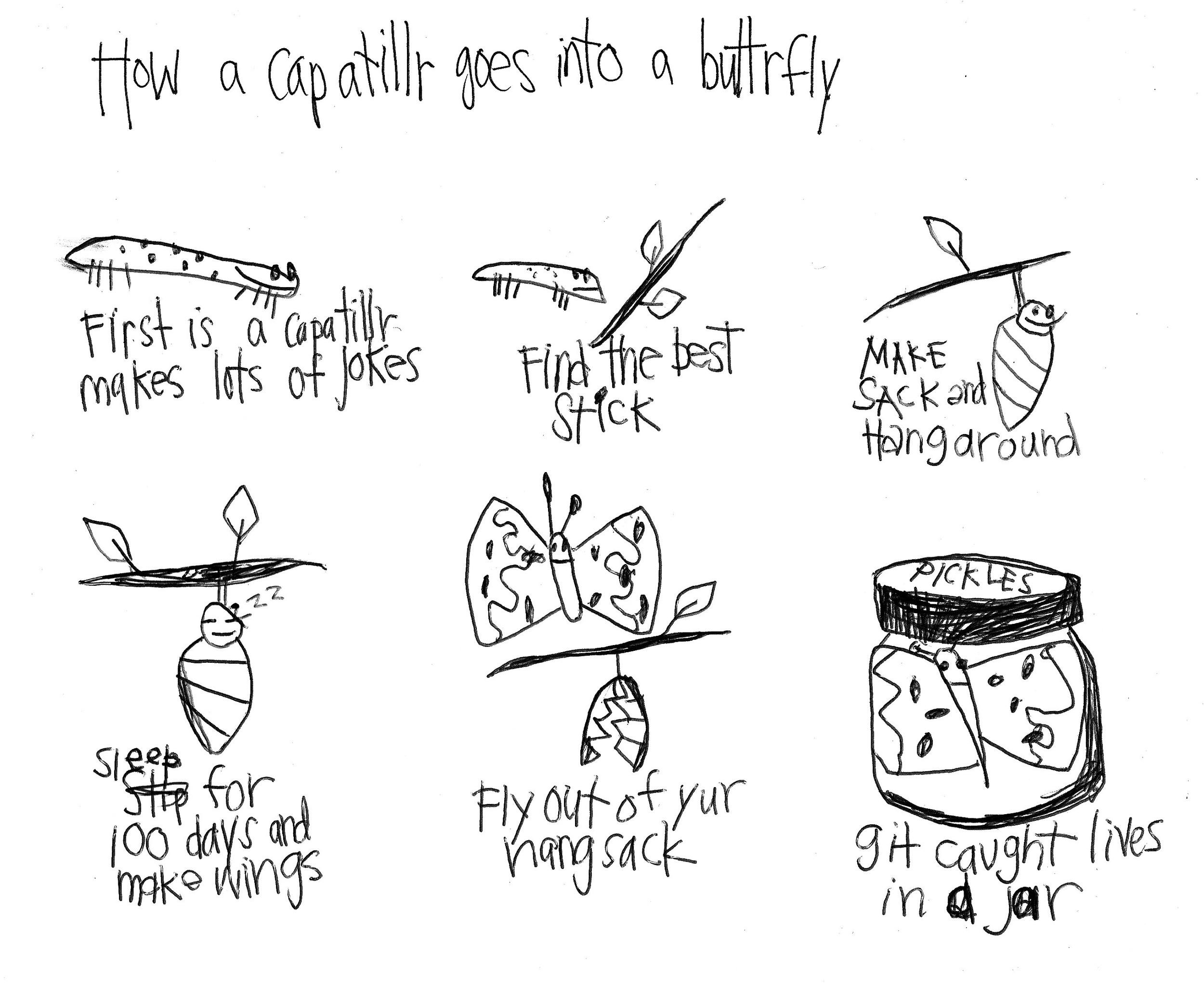 catiplr to buterfly.jpg