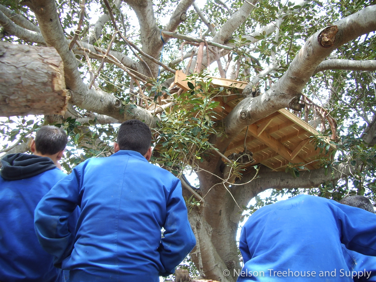 Students admire the treehouse in Tangier