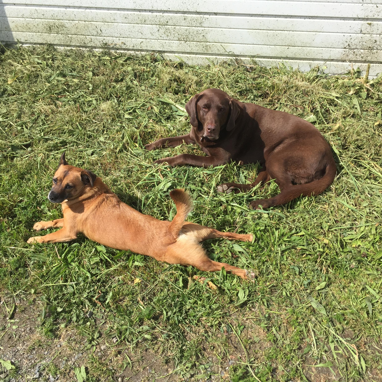 Bun and victor working hard in the sunshine.