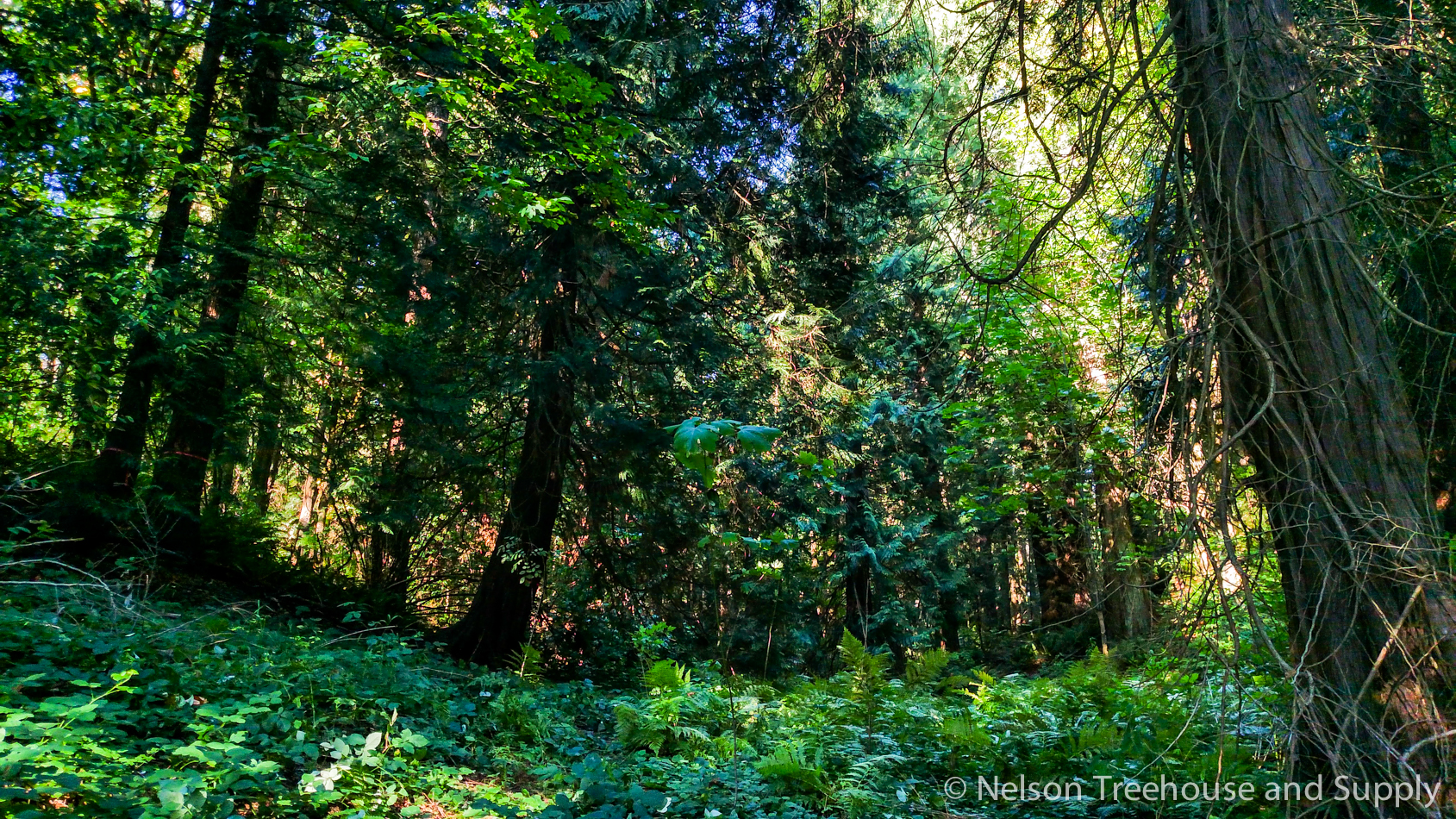 The forests feel almost magical at Treehouse Resort and Spa!