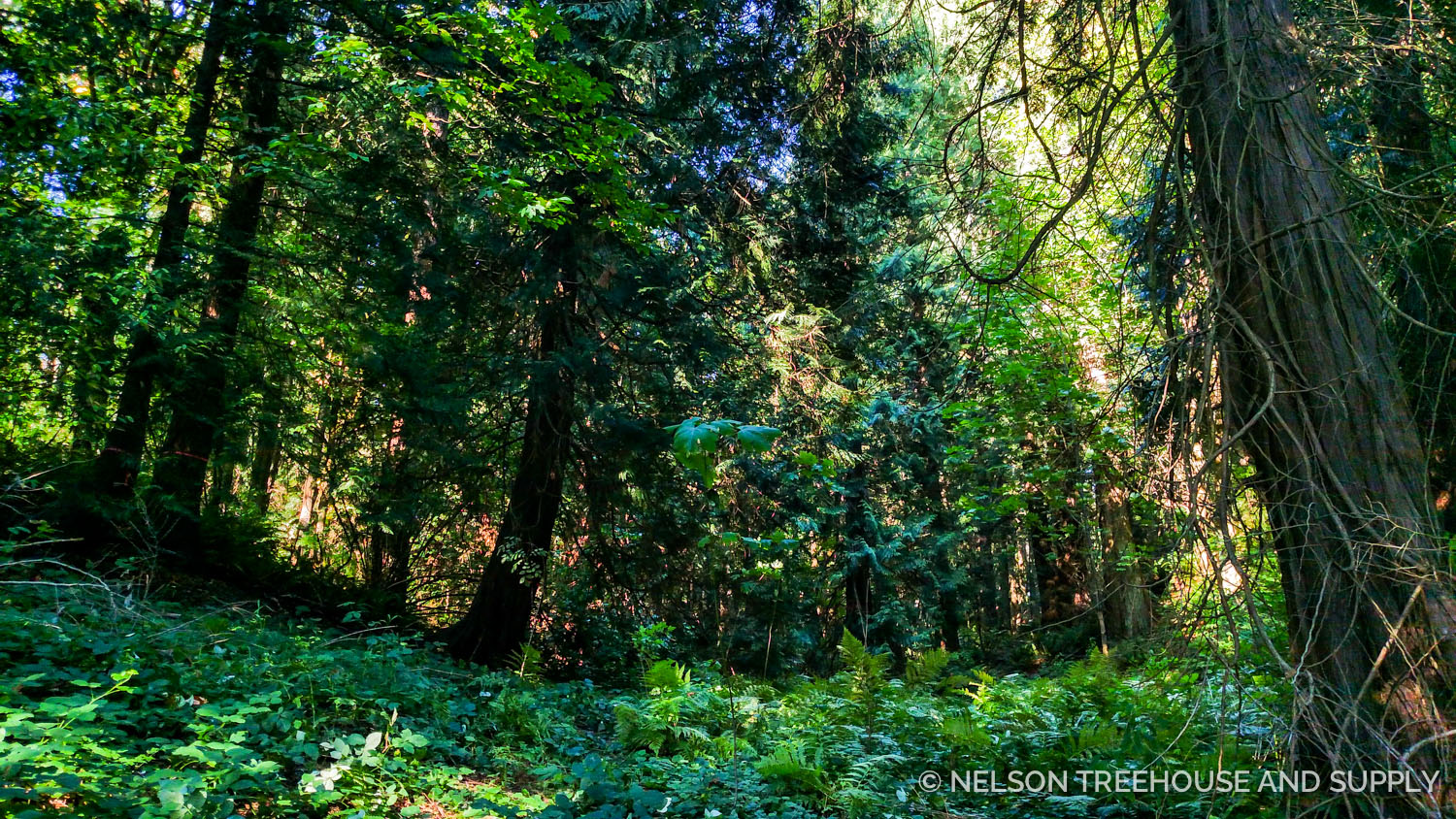 The beauty of the forest at treehouse resort and spa takes my breath away.