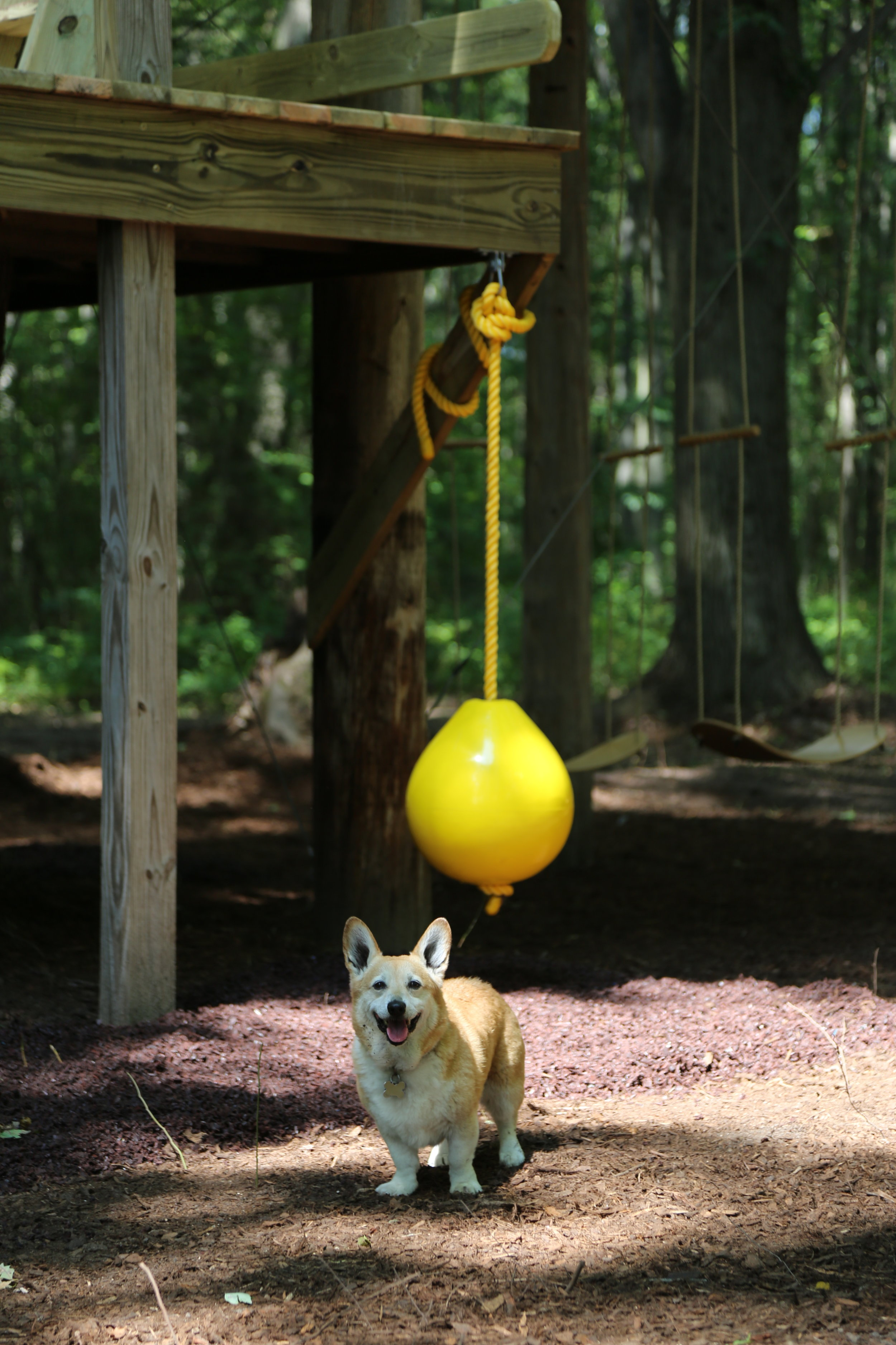 Even dogs love the updated treehouse!