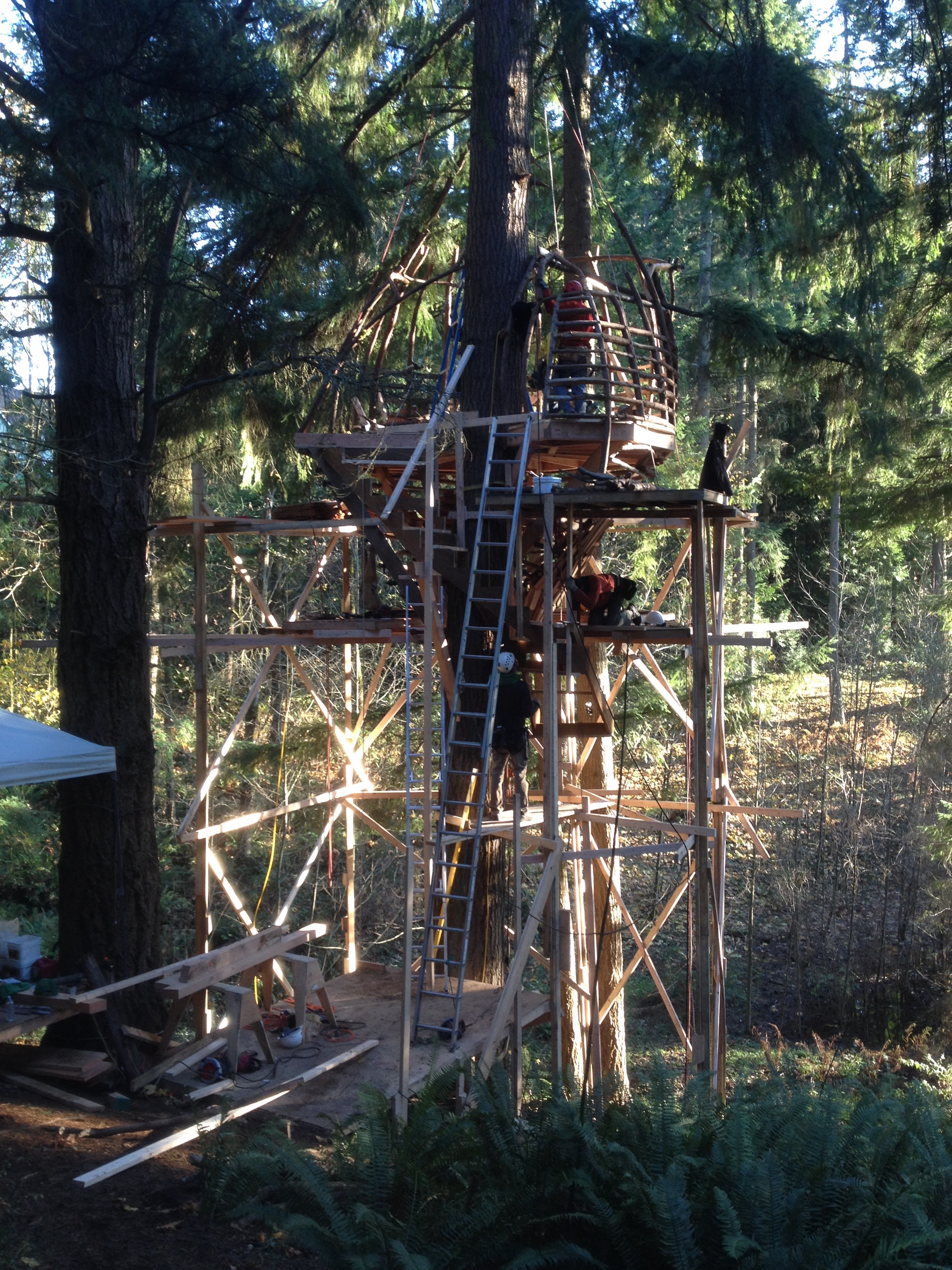 Building The Beehive Treehouse