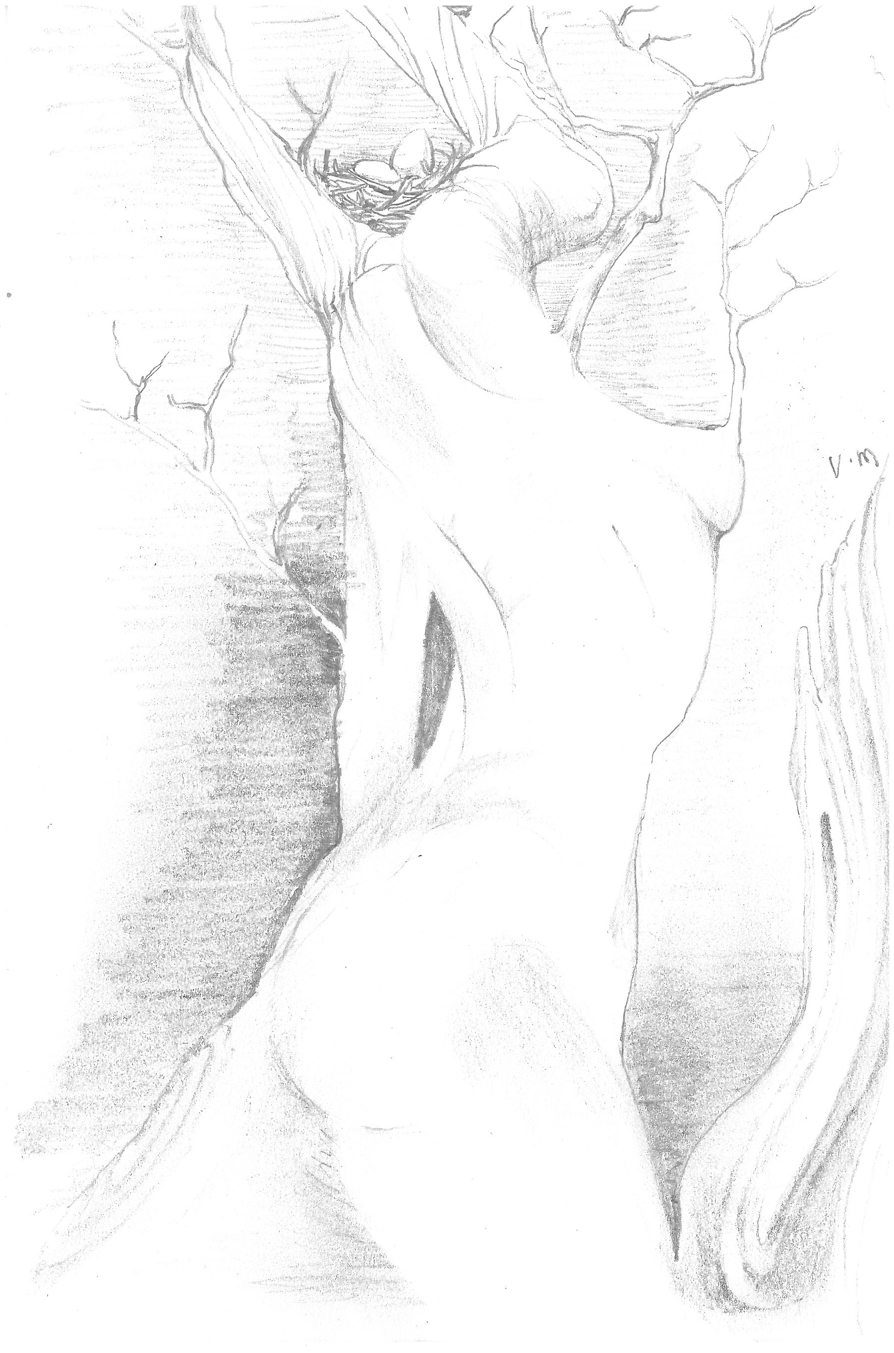 Rolf created this pencil drawing in the Pacific northwest. it served as a draft for a larger painting.
