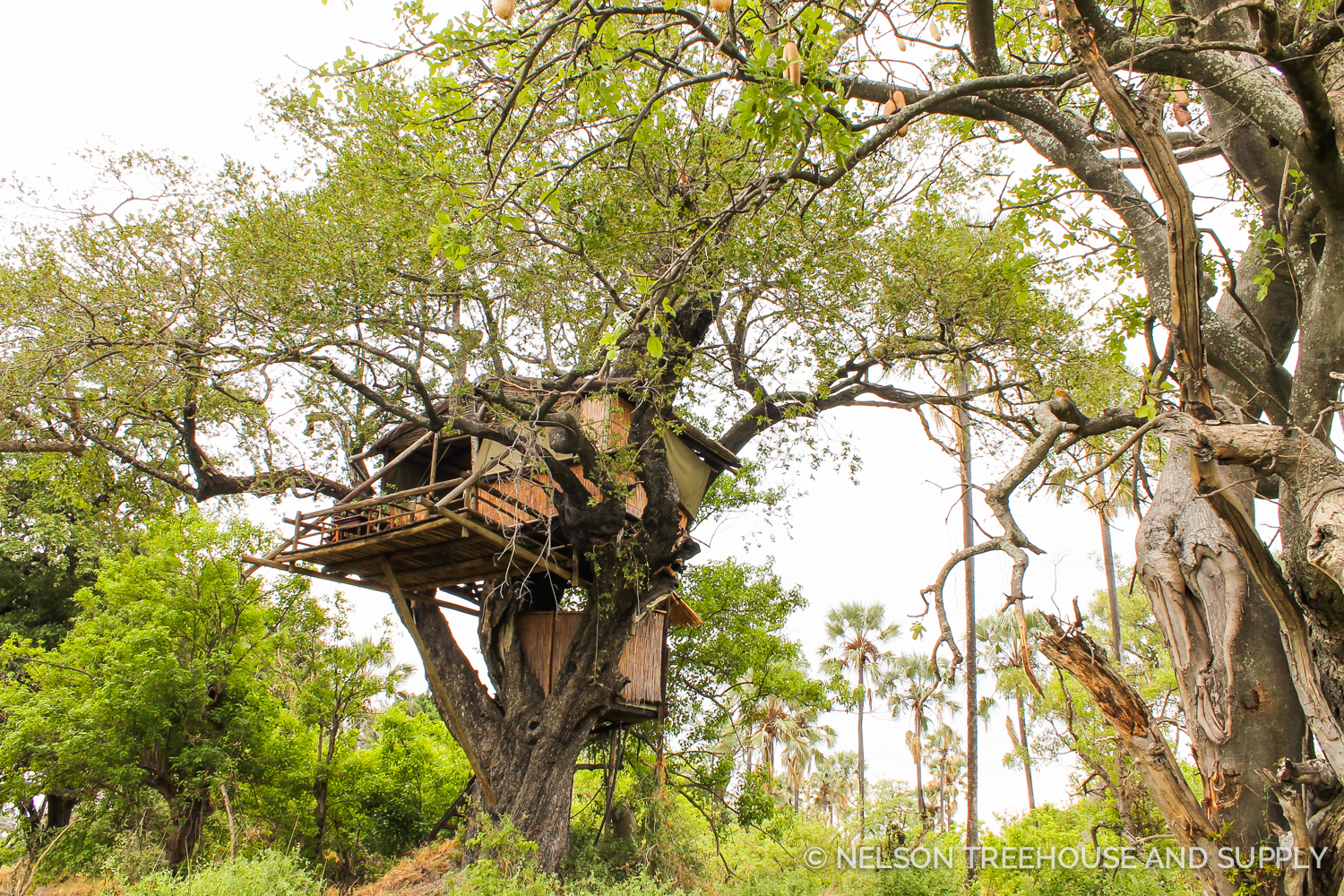 Odd ball Camp treehouse in Botswana.Photo by Dylan Rauch.