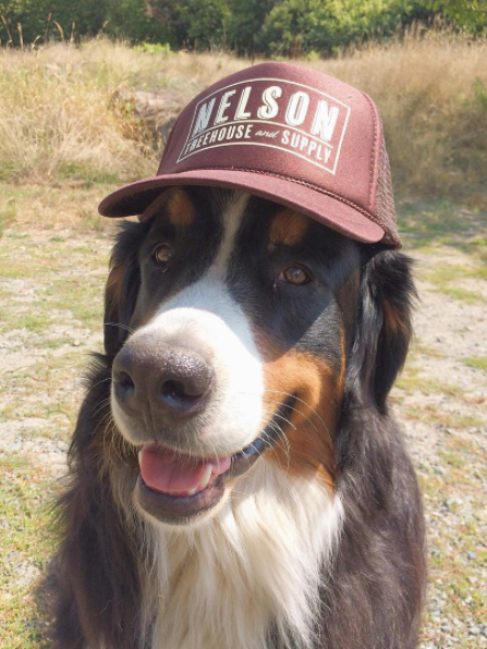 Huxley reppin' the  NT&S Snapback