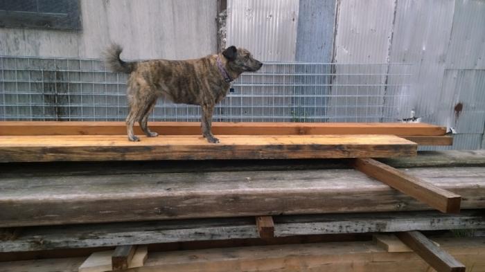 Neko Toby Maloy Shop Dog