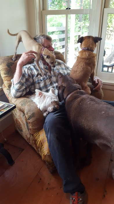 Nelson dogs doing their best to keep pete from leaving again for another treehouse build