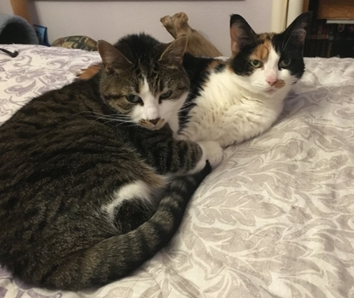 Elaine's two cats, Sage and MaeBY, were adopted as adults.