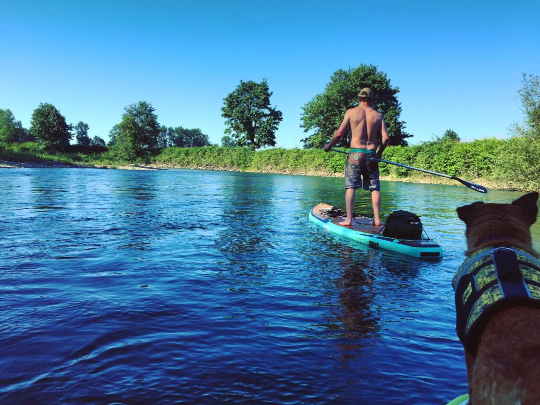Emily and Patrick's pooch, Toastybun, (pictured on far right) leads an expedition to explore local waters with Experience SUP.