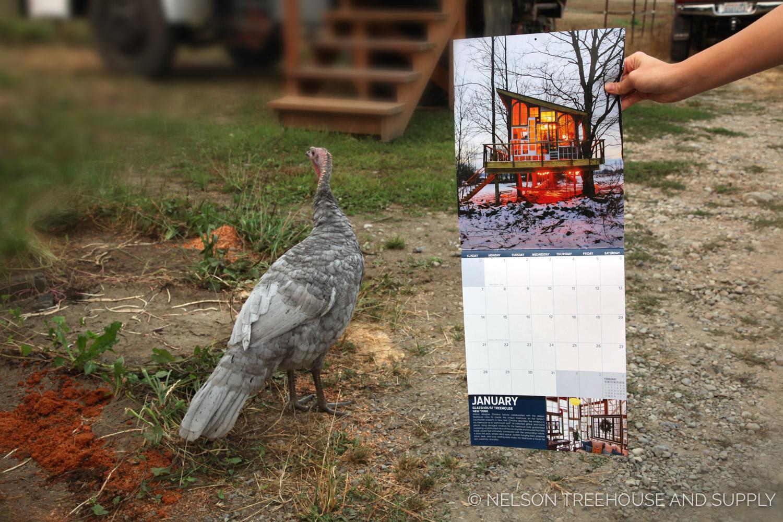 Calendar-Turkeys.jpg