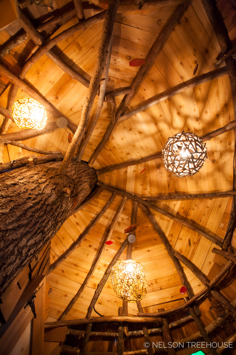 Ceiling of the beehive treehouse