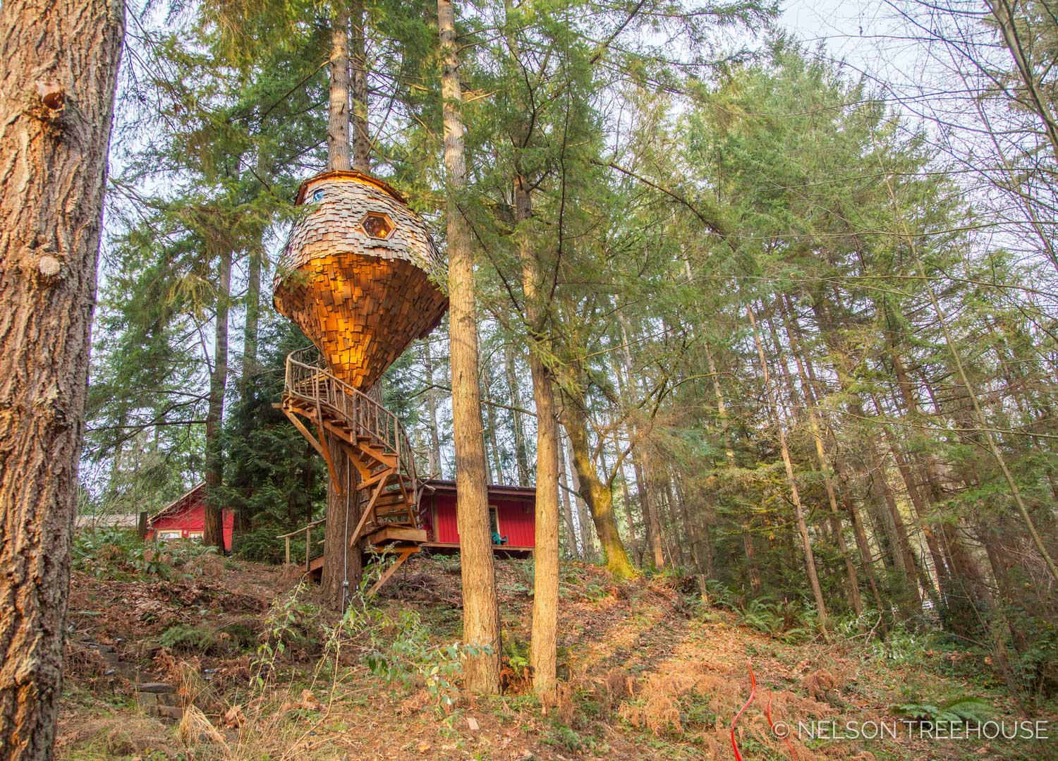 Base view of the Beehive Treehouse