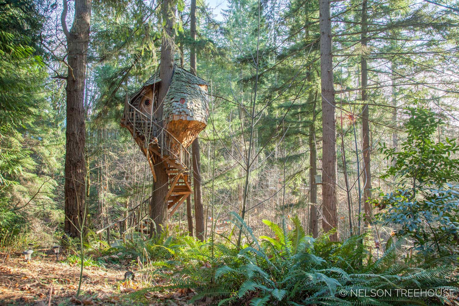 Beehive Treehouse in the forest