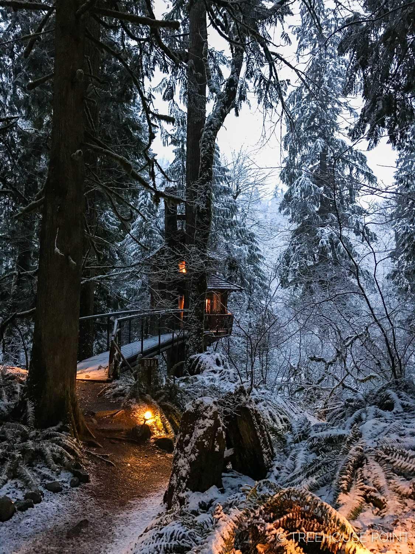 Snowy Burl Treehouse