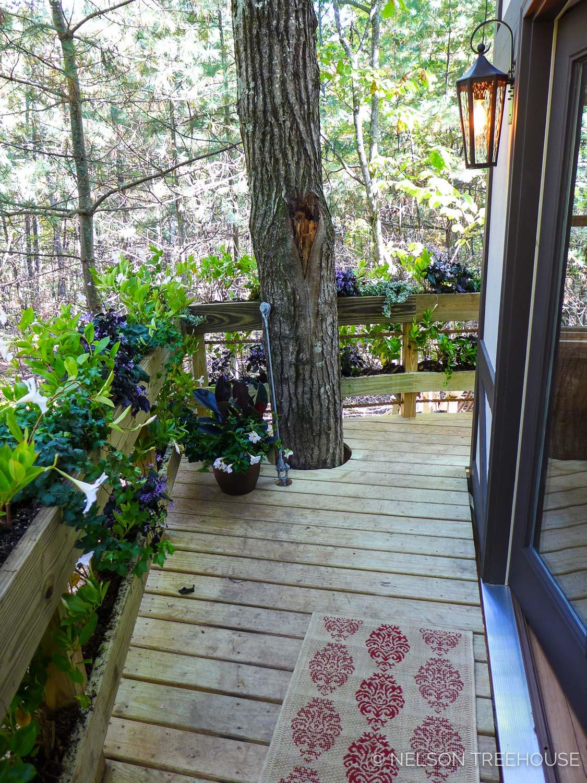 MA-Nelson-Treehouse-2017-98.jpg