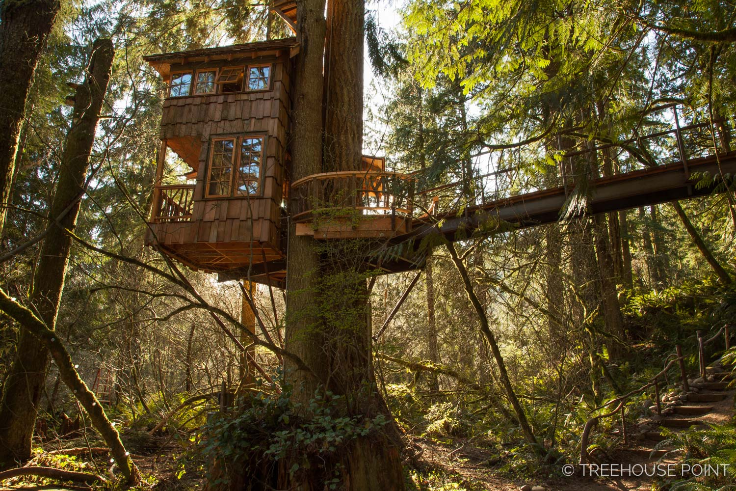 "The burl treehouse is also known as the ""Honeymoon suite,"" as it's a favorite of many newlyweds."