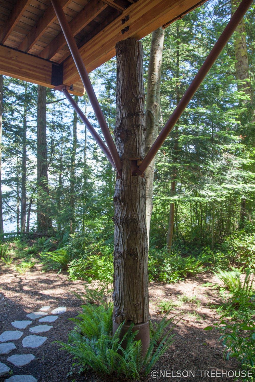 seaside Treehouse - Nelson Treehouse - Faux Tree