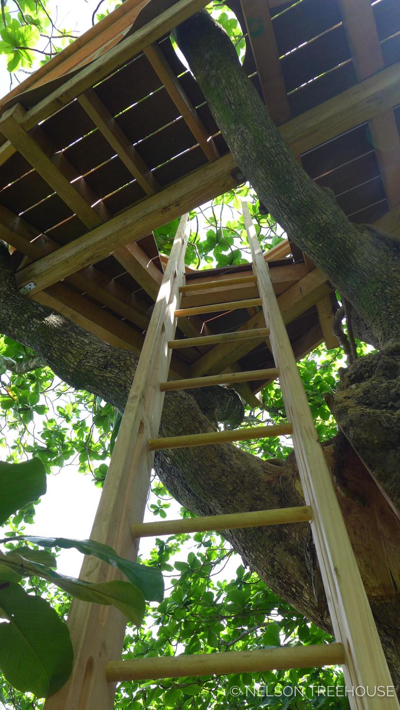 Kauai-Nelson-Treehouse-2018-261.jpg