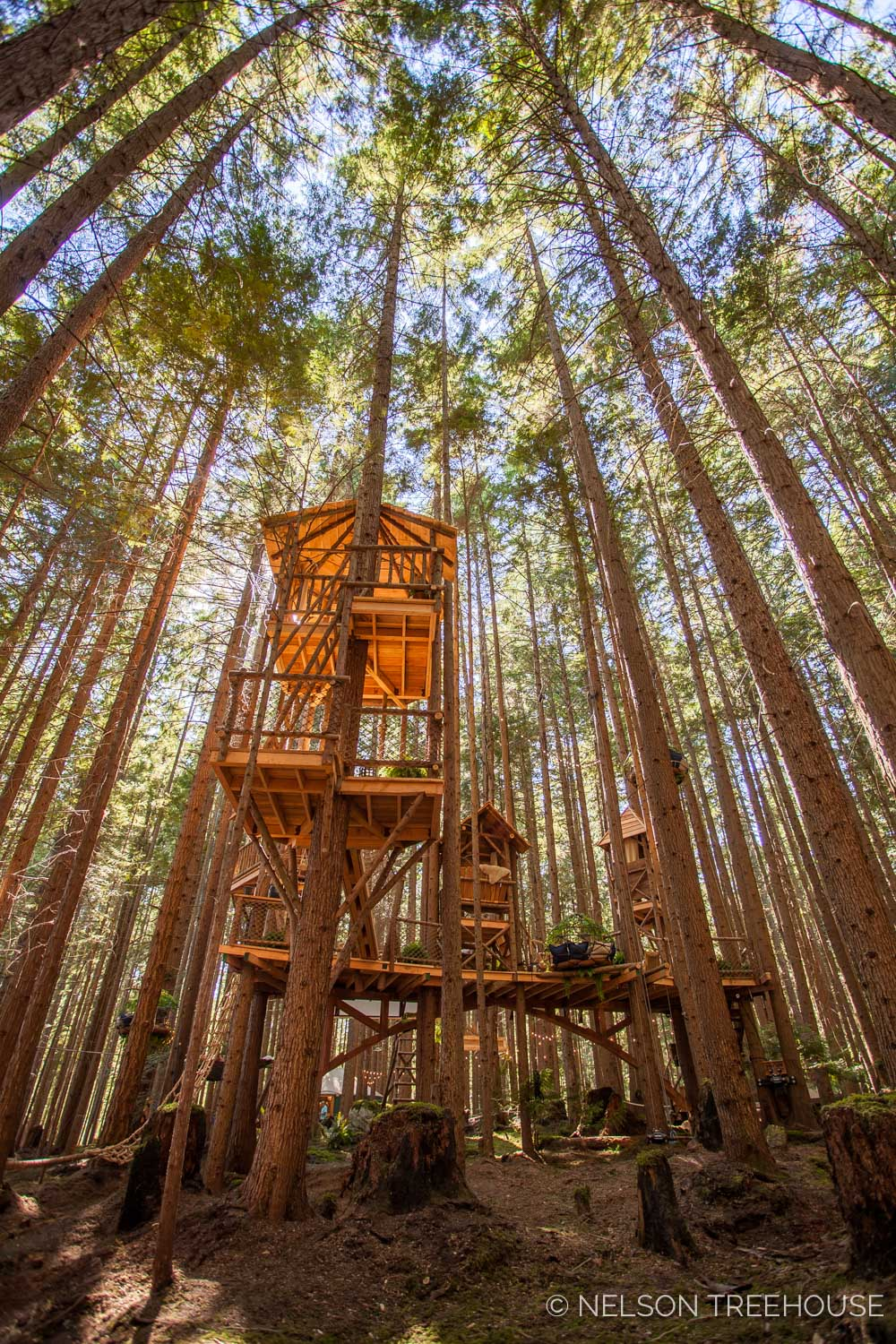 Treetop-Movie-Theater-2018-Nelson-Treehouse-252.jpg