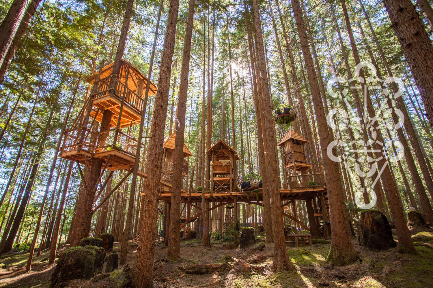 Picture of: Nelson Treehouse