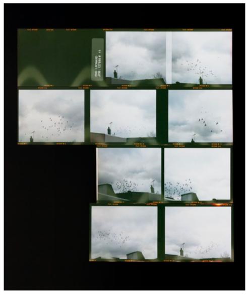 Zoe Leonard   Roll #11 , 2006/16, C-print, Edition 4/6 + 2 AP