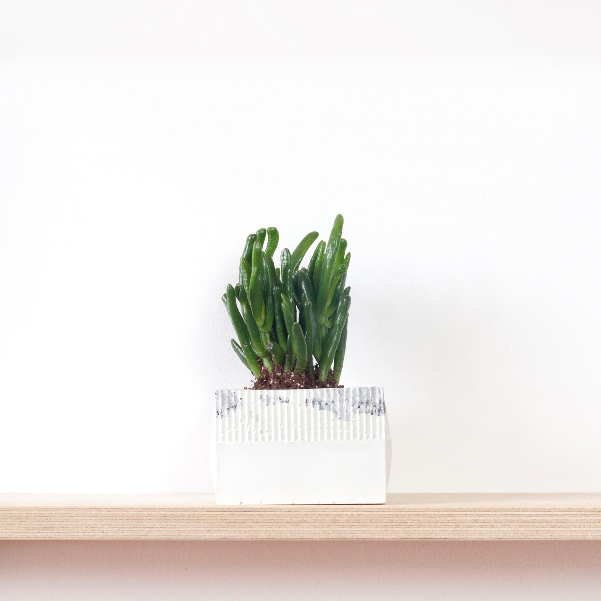 9-plantpot-onedesignspace-web.jpg