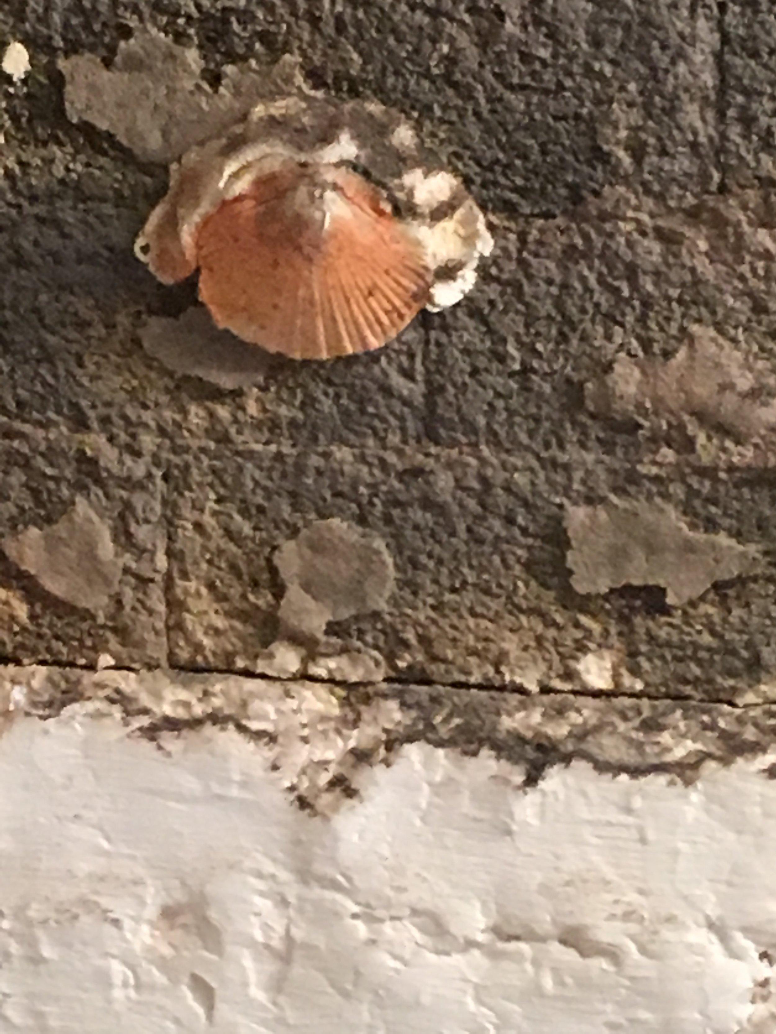 shell stuck!