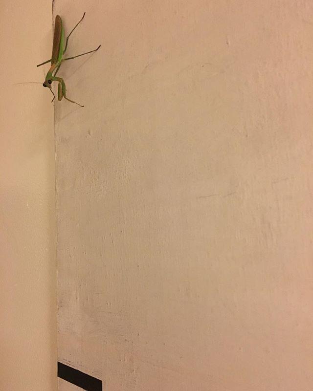 Mantis meets minimalism