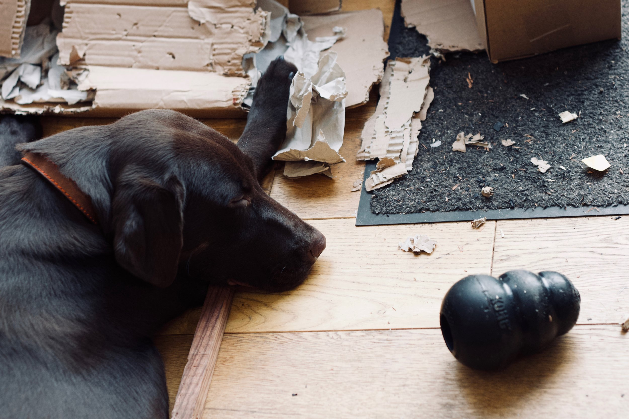 Juno's musings on the validity of Torres's experiments with paper mache