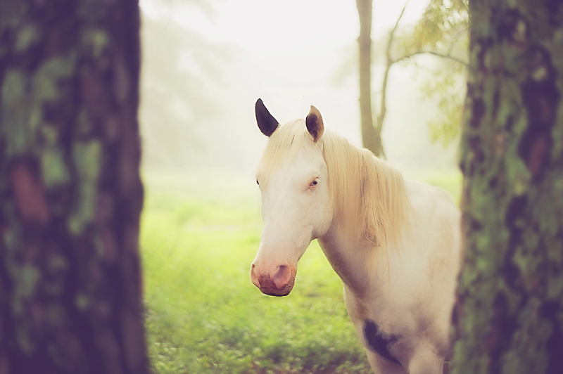 16x24 horse copy.jpg