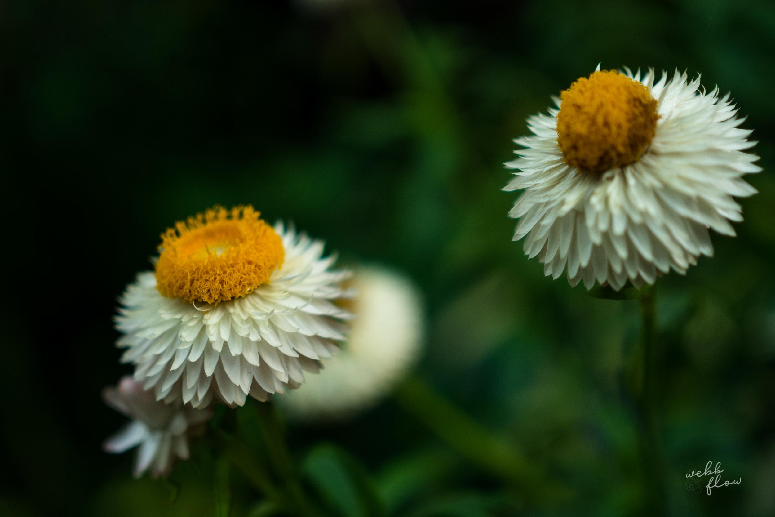 gardens_webbandflow-6.jpg