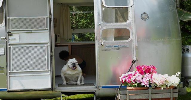 Glamstreams: always bulldog friendly. #TCMH . . . #weddingvenue #weddingvenuenyc #weddingsummer2018 #summer2018wedding #weddingplanning #weddingphotography #weddingdecor #weddinginspo #weddingideas #farmhousewedding #TCMH #eventplanning #barnwedding #airstream #airstreamdreams #airstreamdream #bulldogsofinstagram #bulldogsofinsta