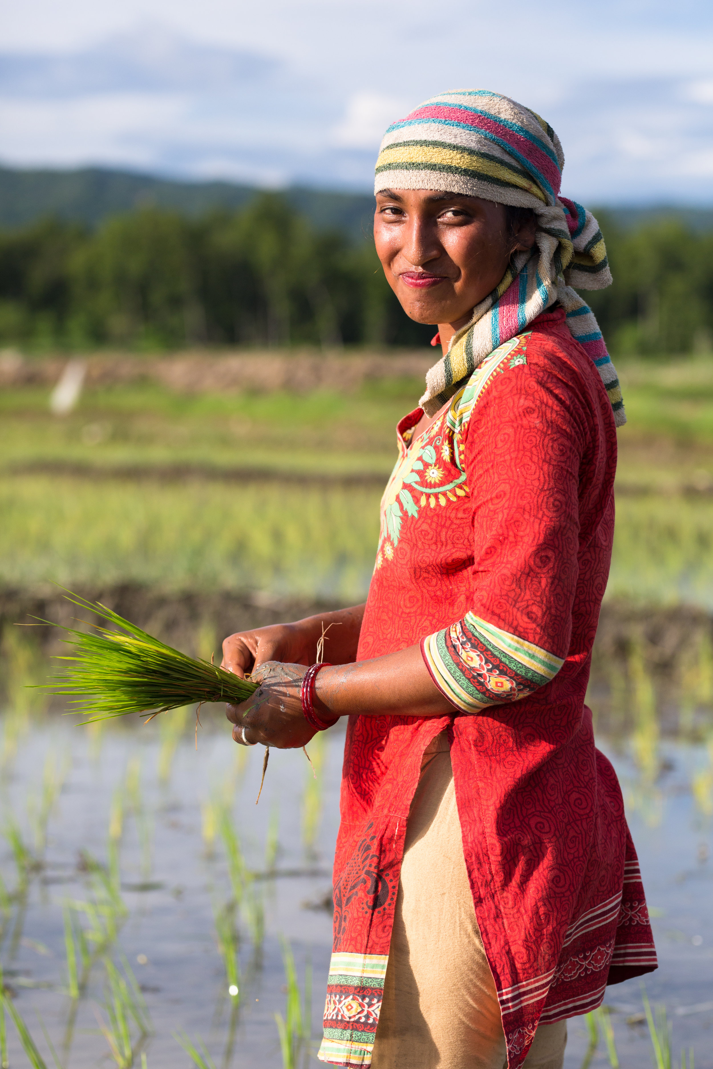 The inspiring women of Raitole plant rice in the muddy water-filled rice fields