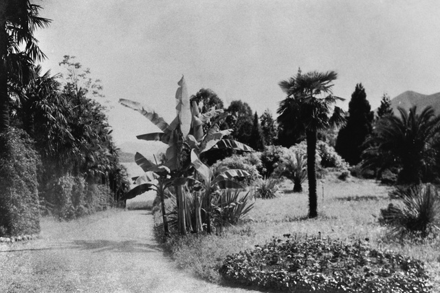 The view of a part of the botanic garden in 1900