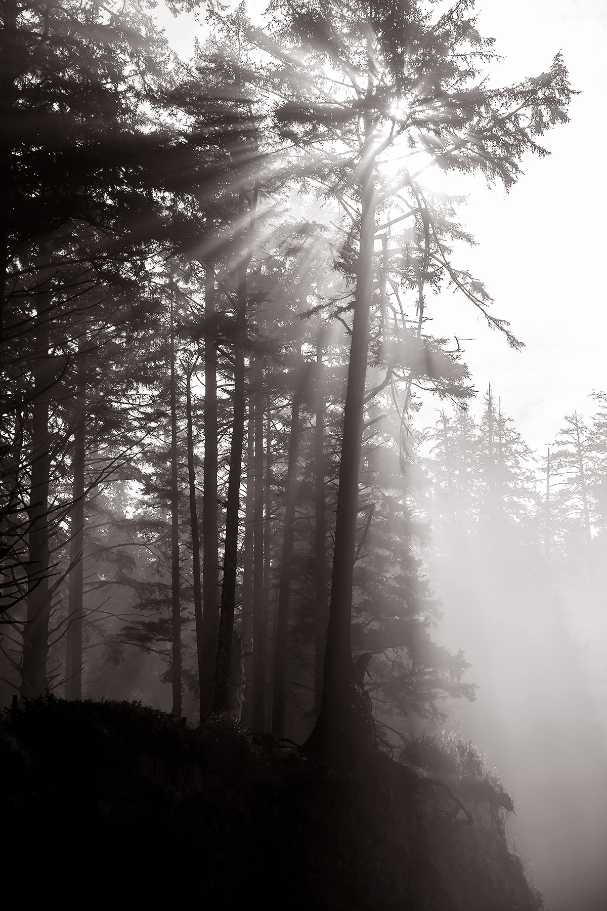 Extras_040_Portland Forest.jpg