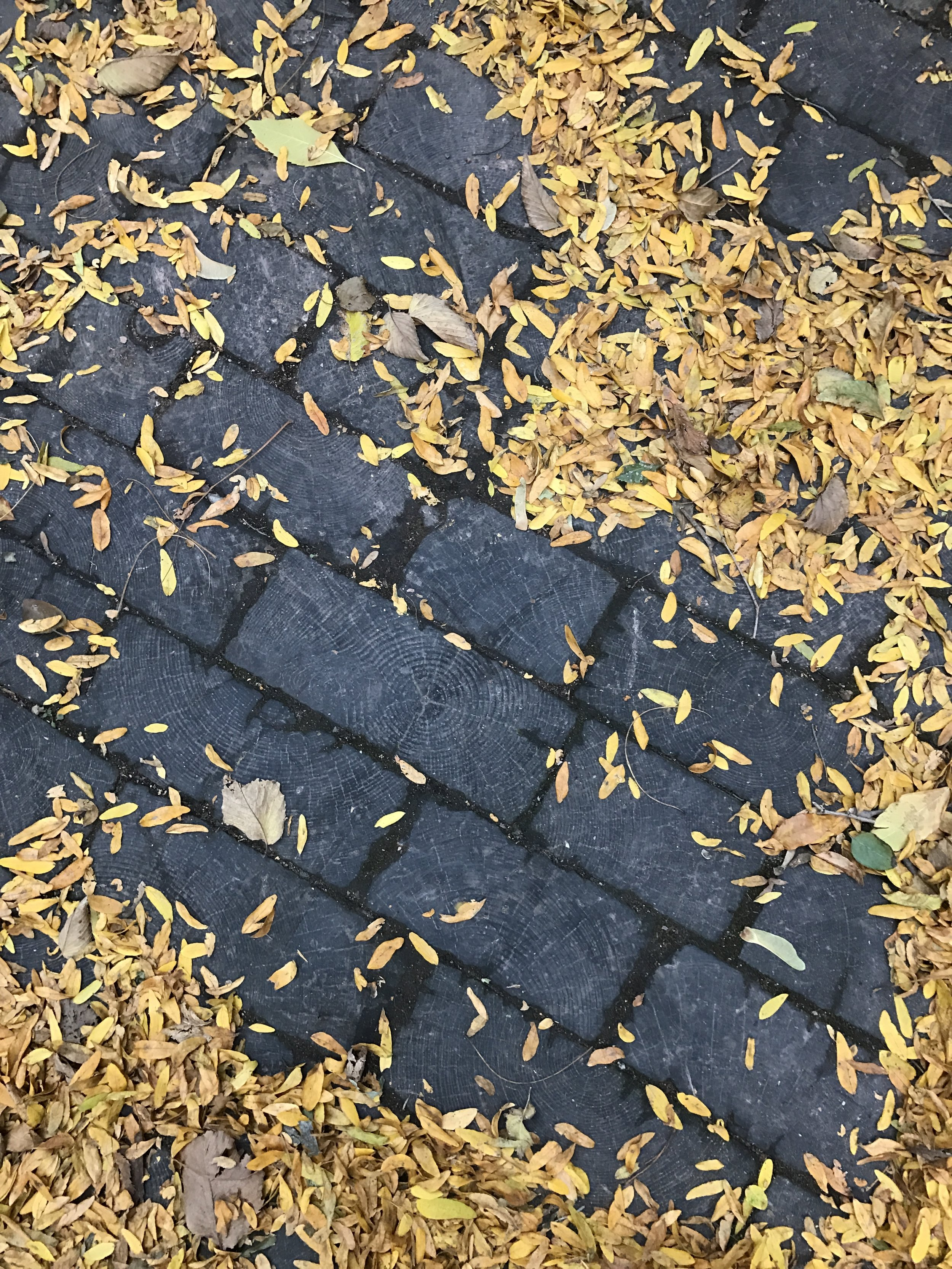 The few surviving wooden planks used to pave Chicago's streets. Taken this past weekend on a graveyard tour with Carolyn.