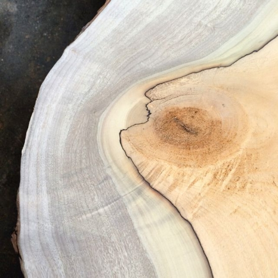 Compartmentalization line on a slab of local bay laurel.