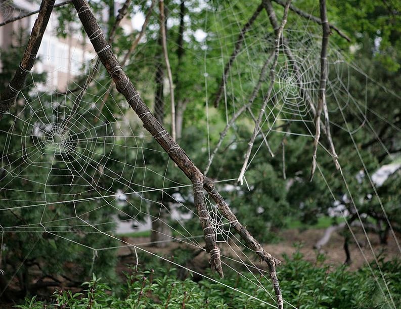 "Neil Goss, ""Re-Rebirth of Biocentric Interconnectedness,"" 2011"