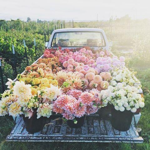 Future goals. #futuregoals #flowertruck #flowers #lovely #farmlife #wedding #pastel #pink #rainbow