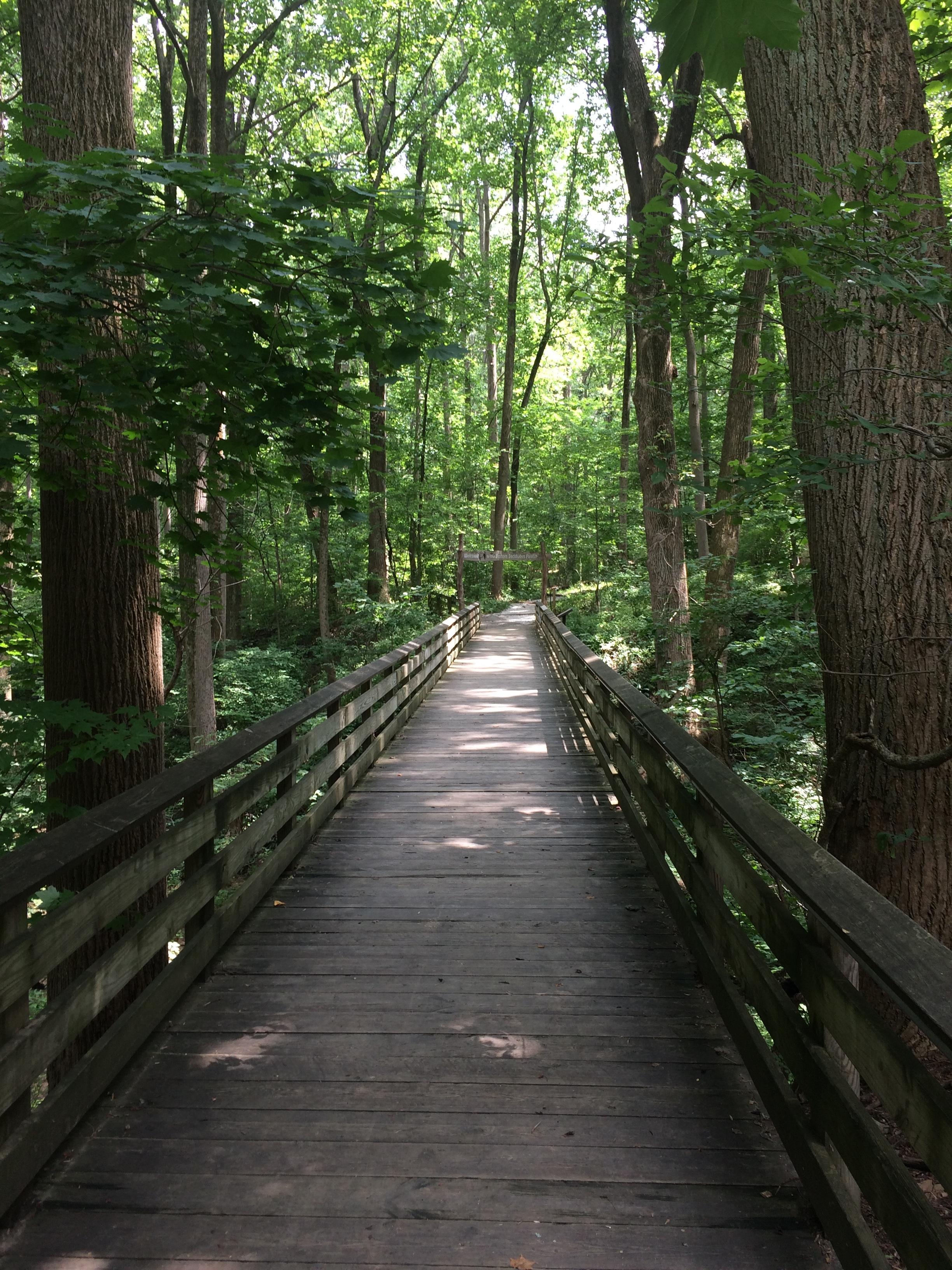 The path we create