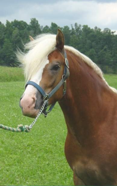 Wrazor Edge Hallmark (Walzertakt x Cavur NTF) Foaled 5/19/01, Stallion