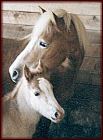 Bella (Ancora x Bori) and Bekka (Whitaker NTF x Bella)