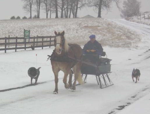 Worthington Hallmark, Jed, Ellie May & Bill enjoying this winter day.