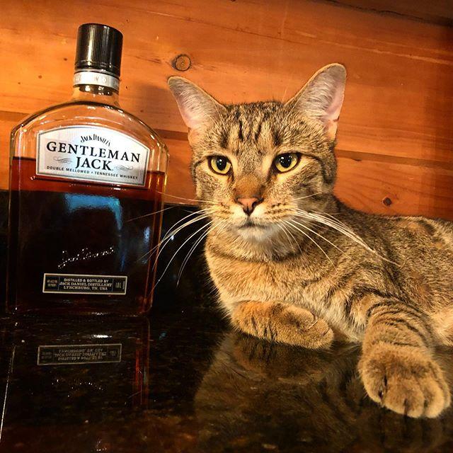 Jack the Cat, a true gentleman.  @jackdaniels_us this cat knows what's up. 🥃 . #gentlemanjack #jackthecat #dragonranch #garmezyglass
