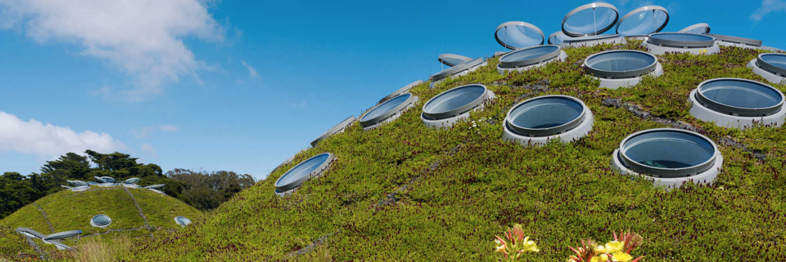 green roof at the  California Academy of Science s