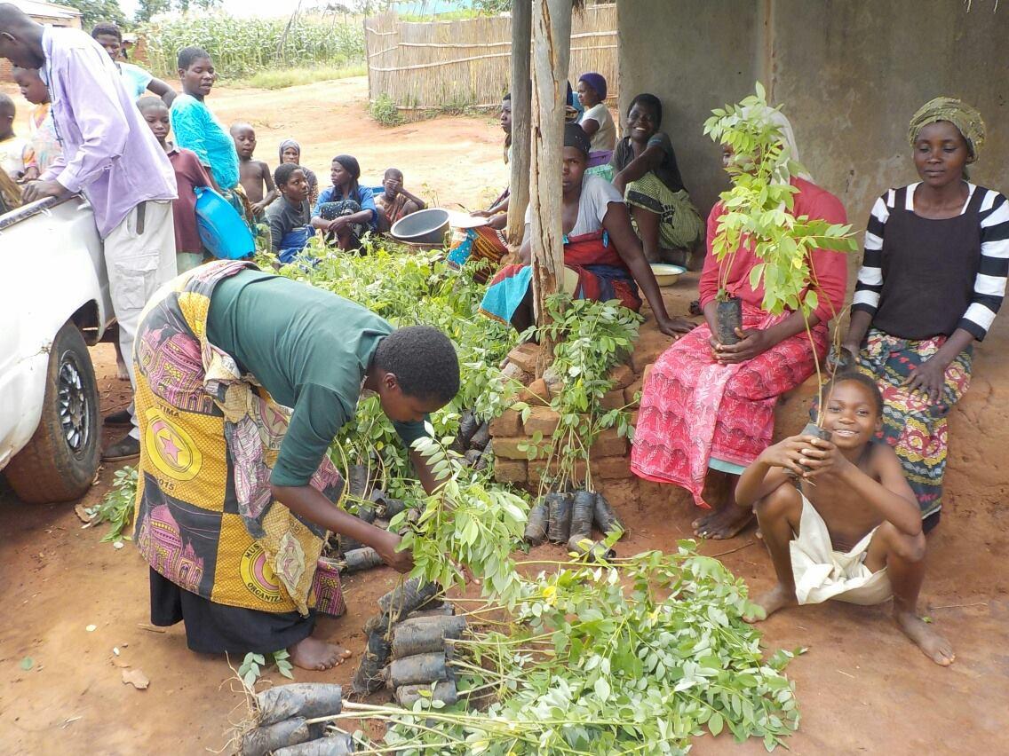 malawi-tree-distribution