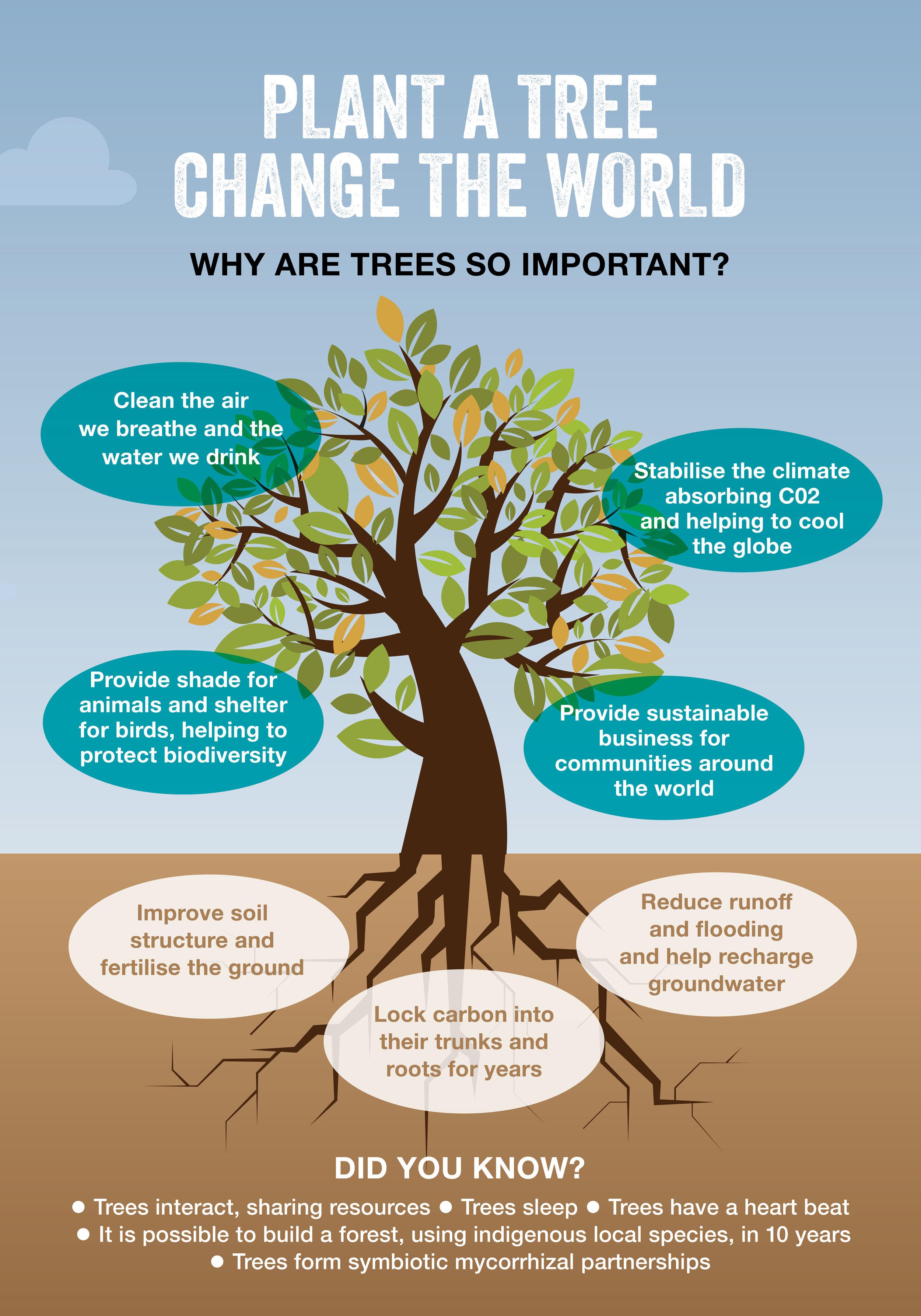 tree_infographic.jpg