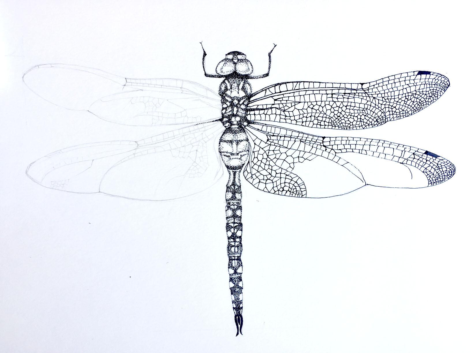 Dragonfly step 2.jpg